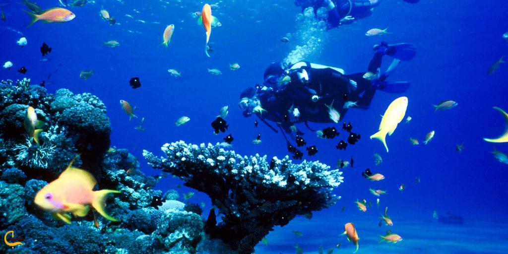 غواصی در آب های خلیج فارس