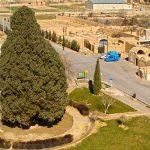 نمایی از سرو کهنسال ایران به همراه شهر ابرکوه