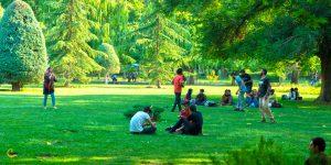 پیکنیک در پارک