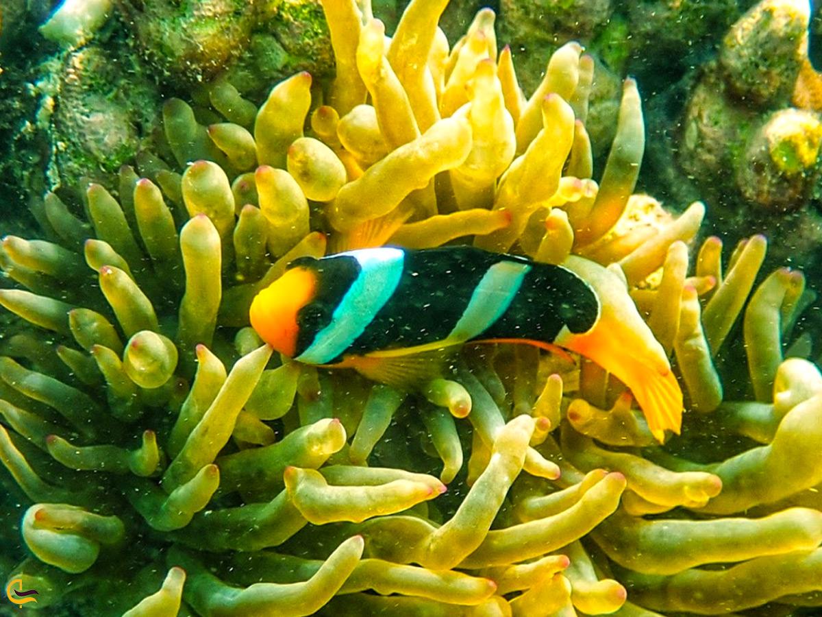 ماهیان سایت غواصی ژوراسیک