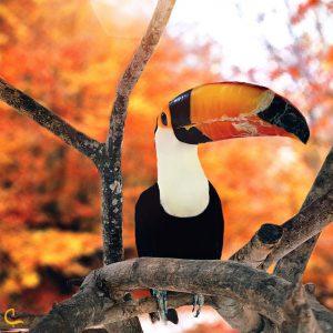 باغ پرندگان در کیش