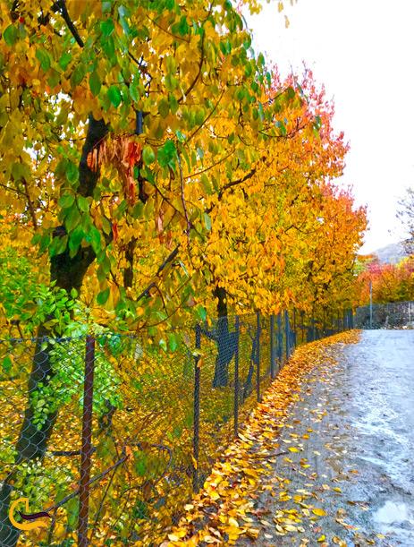 منظره زیبای پاییزی در افجه