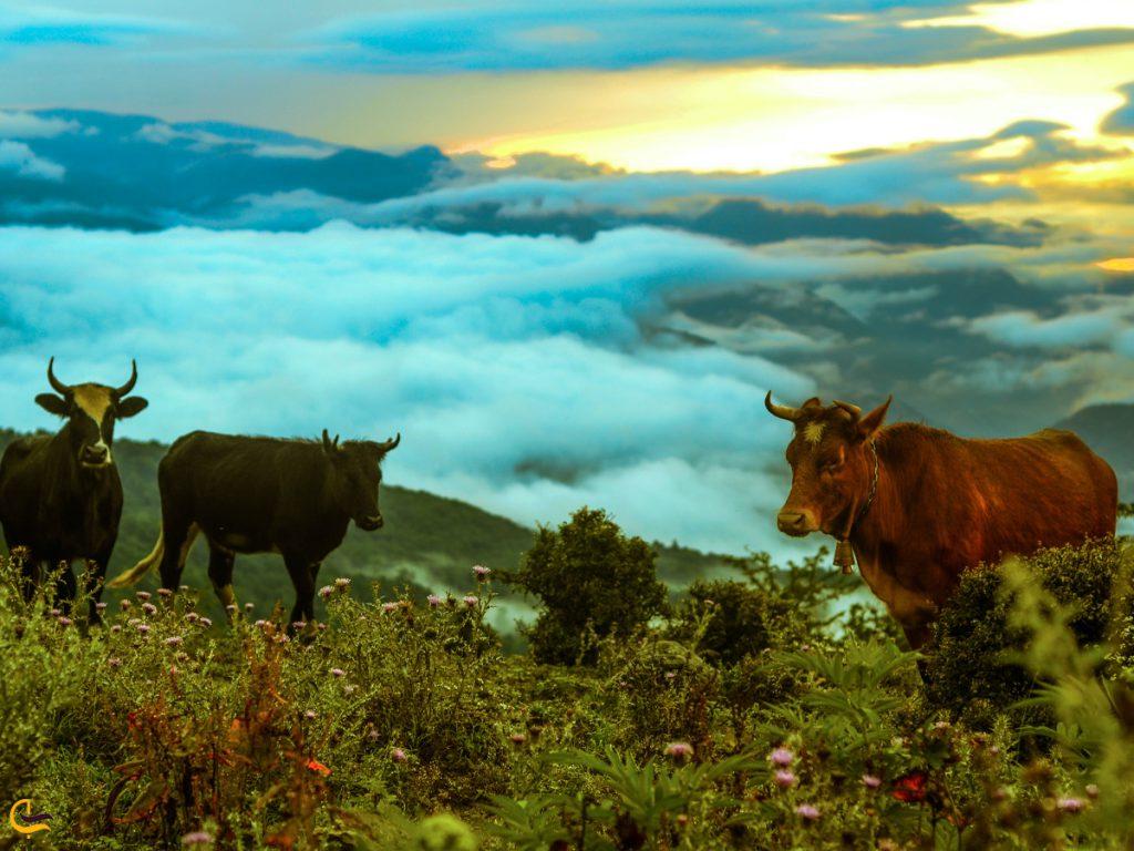 حیوانات اهلی در روستای فیلبند