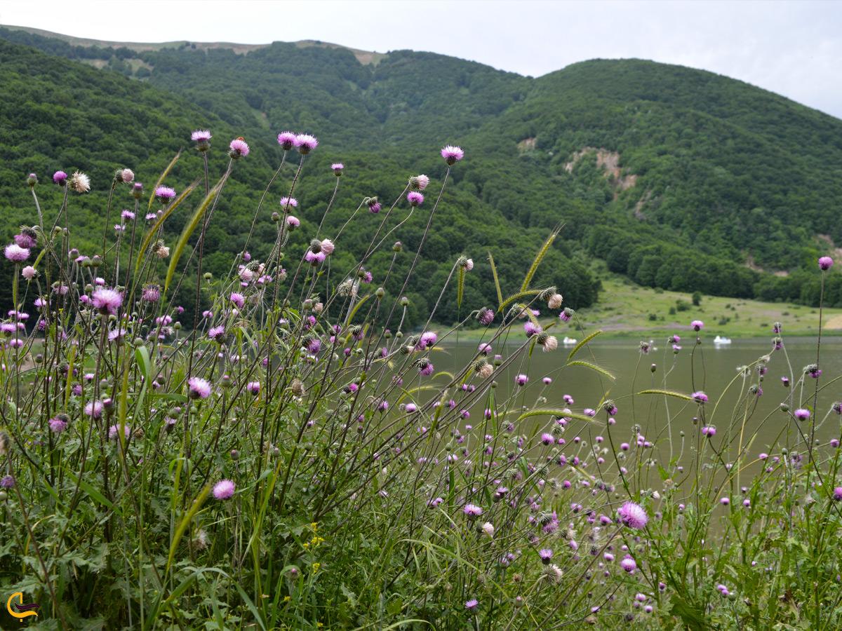 گیاهان اطراف دریاچه ویستان