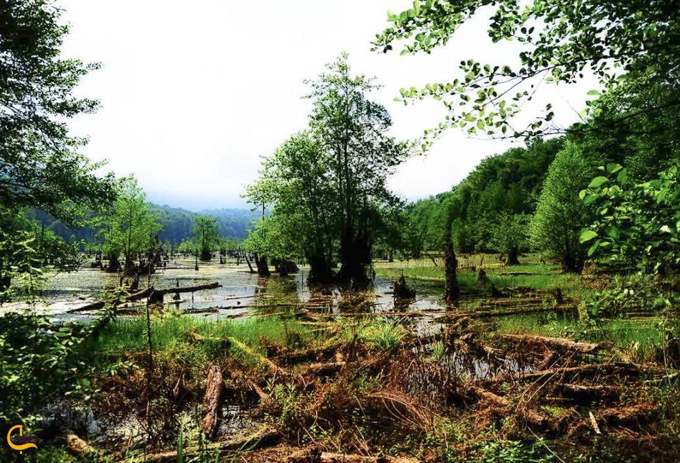 طبیعت تابستانی اطراف دریاچه ارواح