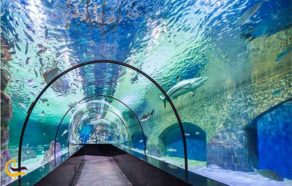 نمای داخل آکواریوم تونلی اصفهان در پارک ناژوان