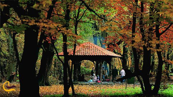 آلاچیق های مخصوص اقامت های کوتاه در جنگل النگدره