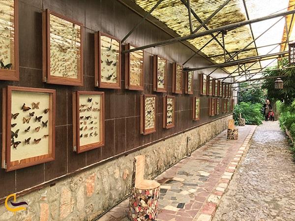 پروانه های خاص و نادر در باغ پروانه های پارک ناژوان