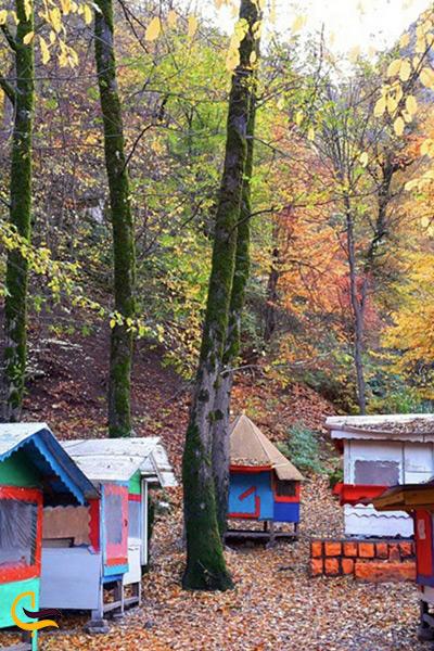 سفر به جنگل های ایران در فصل پاییز