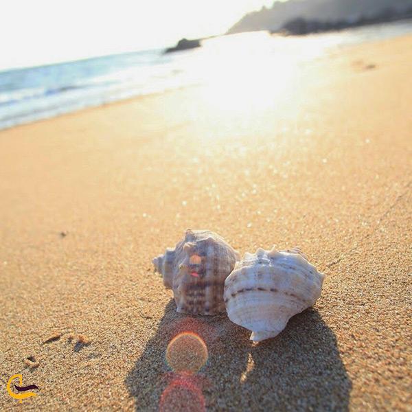 صدف های گوش ماهی زیبا در زیر نور آفتاب ساحل جزیره لاوان