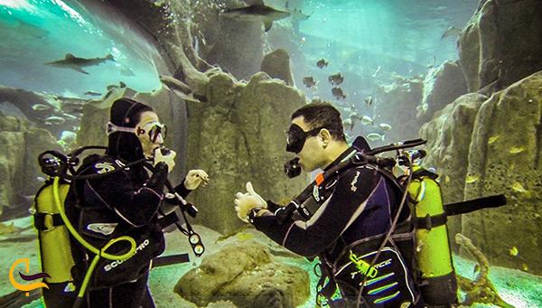 غواصی در زیر آب های استانبول