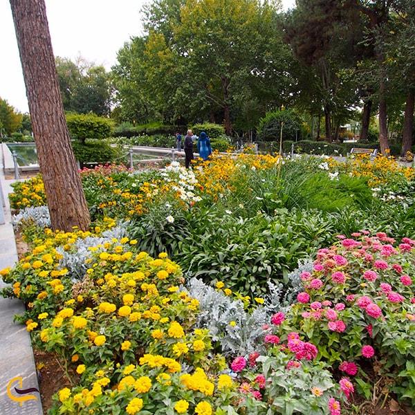 باغ سرسبز و گل باران کاخ هشت بهشت