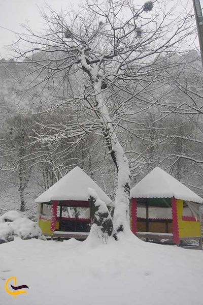 سفر خاطره انگیز در دل سرمای زمستان به جنگل های ایران