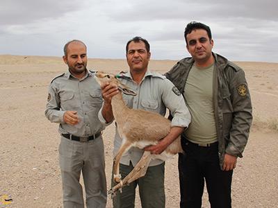 نجات حیوانات توسط محیط بانان در منطقه شکار ممنوع گلاته