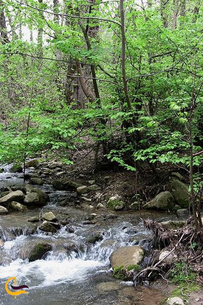 طبیعت زیبای جنگل چهل چای مینودشت