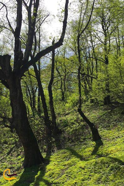 درختان جنگل های استان گلستان