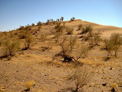 پوشش گیاهی منطقه بیابانی گلاته در خور و بیابانک