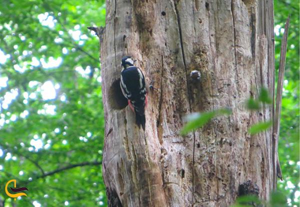 پرندگان بسیار زیبا و کمیاب در جنگل ناهارخوران
