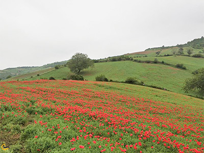 نمای دشت شقایق در جلوی روستای زیبای پادلدل