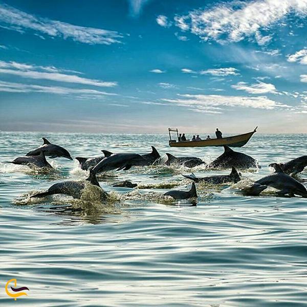 قایق سواری و تماشای دلفین ها در جزیره هنگام
