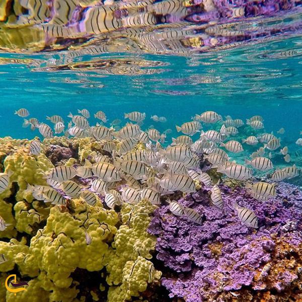 دنیای رنگارنگ زیرآب در ساحل آکواریومی جزیره هنگام