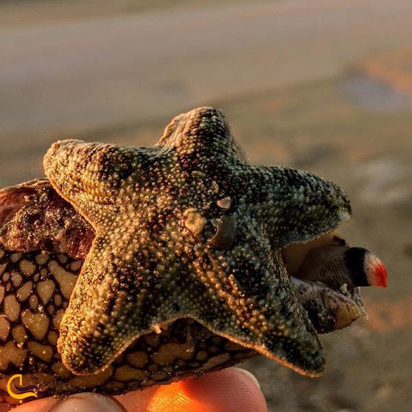 موجودات جالب و عجیب ساحل آکواریومی جزیره هنگام