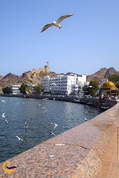 پرندگان مهاجر دریای عمان در چابهار
