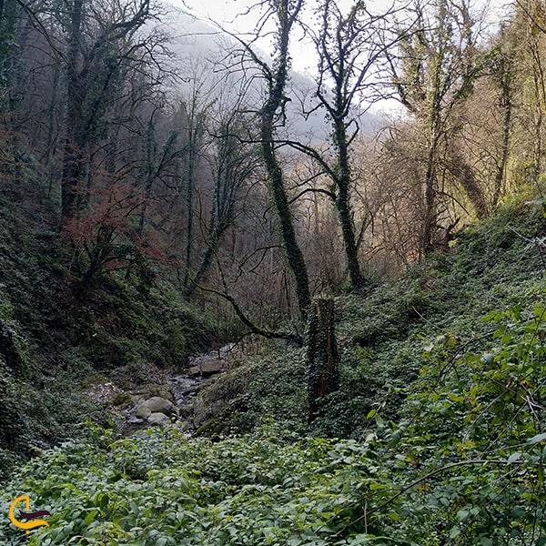 طبیعت جنگل سرسبز روستای زرین گل