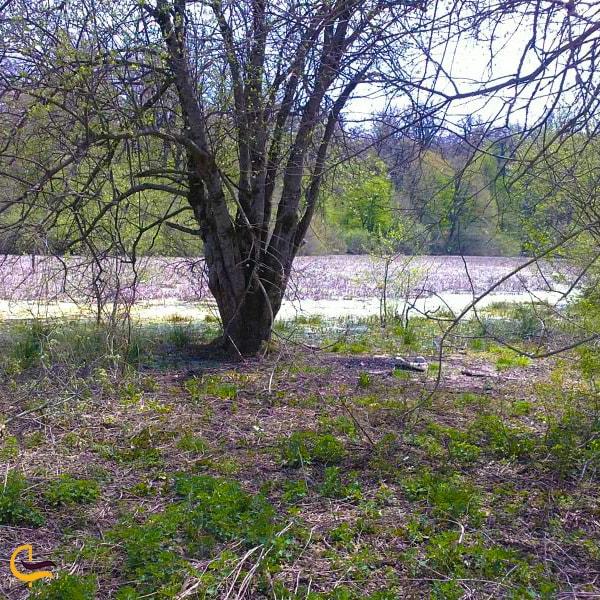 پوشش گیاهی منطقه تالاب سولوکلی