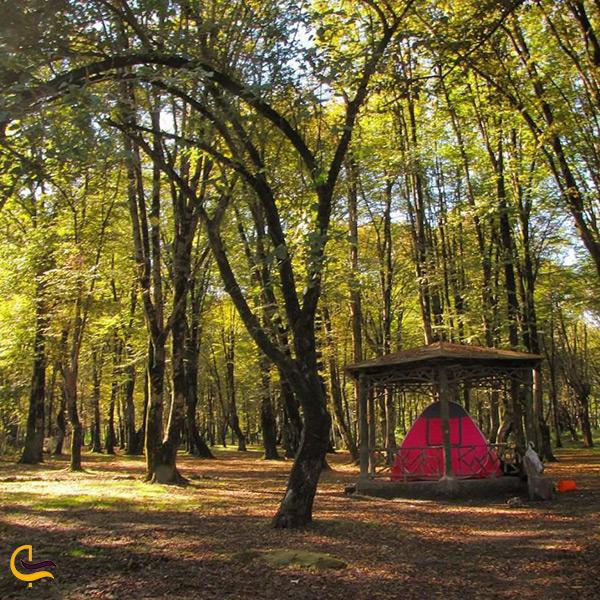چادر زدن و خوشگذرانی در پارک جنگلی سیسنگان در نزدیکی نوشهر