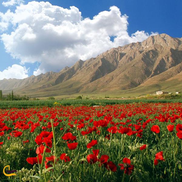 دشت های لاله ی شهر خوانسار