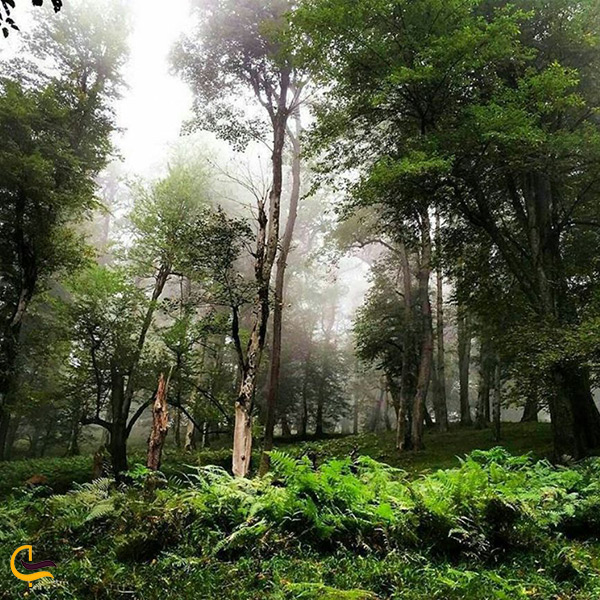 طبیعت شگفت انگیز جنگل دالخانی