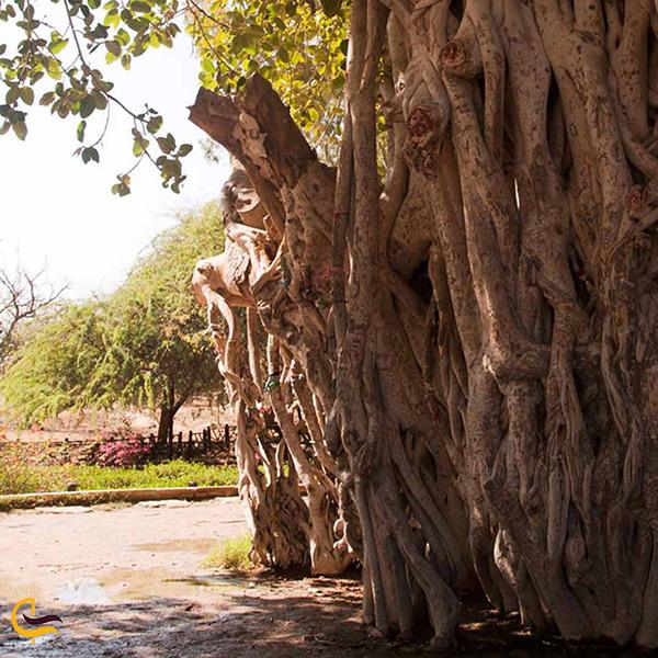 طبیعت زیبای روستای باغو کیش