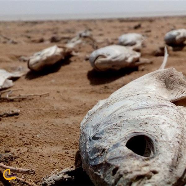اثرات خشک شدن دریاچه هامون بر محیط زیست