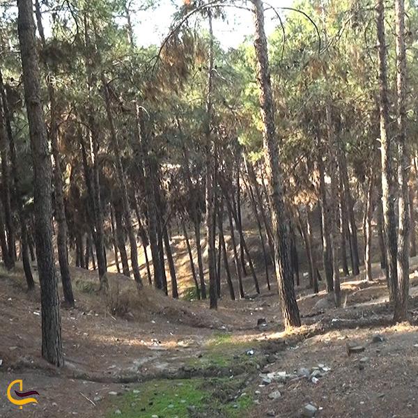 درختان پارک جنگلی پیشوا