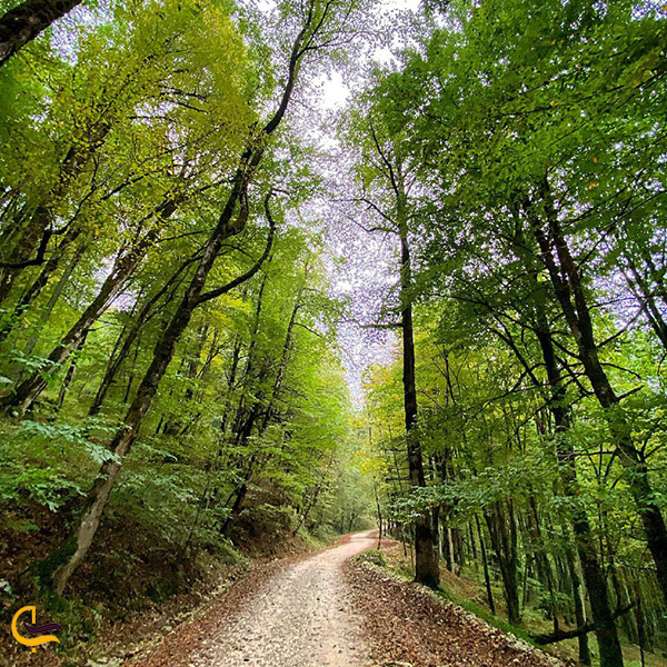 تصویر بسیار از جاده جنگلی در پارک جنگلی سیسنگان