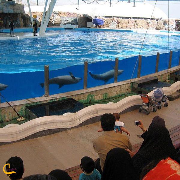 بازدید از پارک دلفینهای کیش