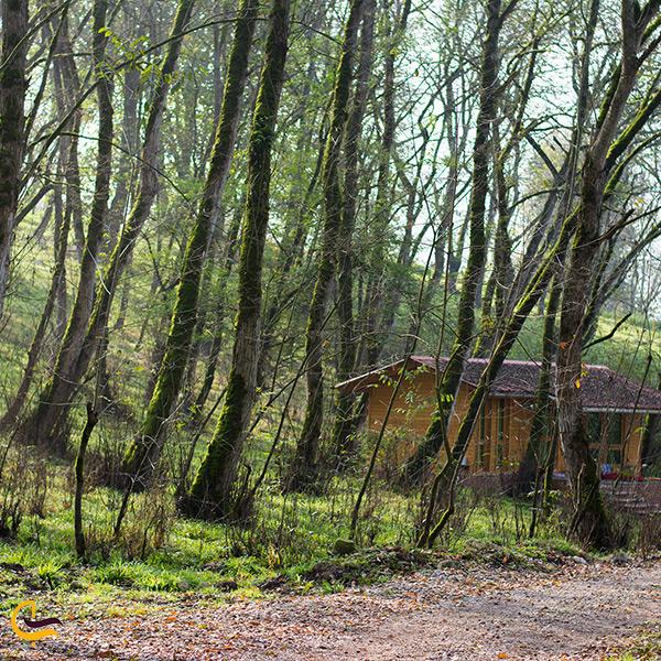 تصویر زیبا از طبیعت پارک جنگلی جوارم