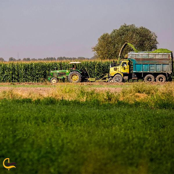 مزارع روستای زرگر قزوین