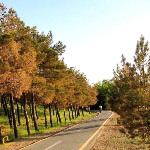 تصویری از راه پارک جنگلی چیتگر