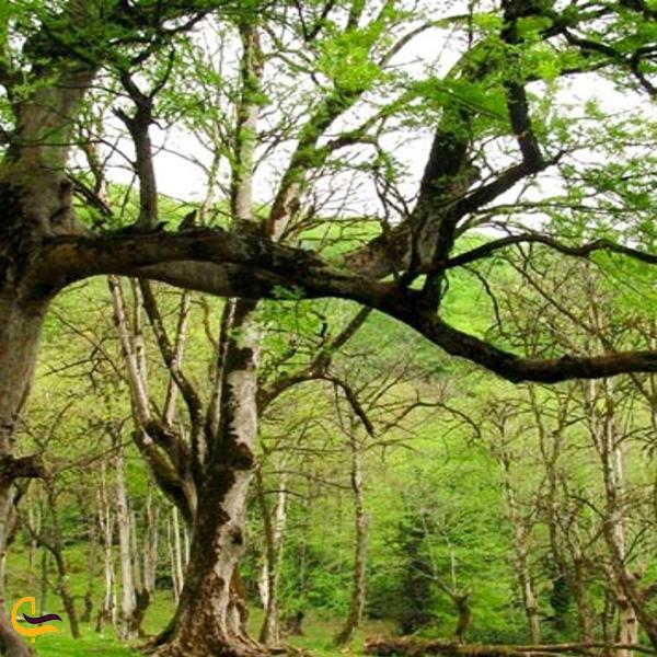 نمایی از درختانپارک چنگلی فین