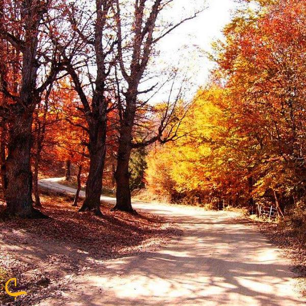 جاده پاییزی جنگل مازیچال