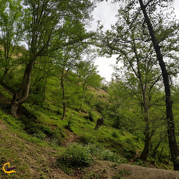 تصویر جنگل ارفع ده سوادکوه