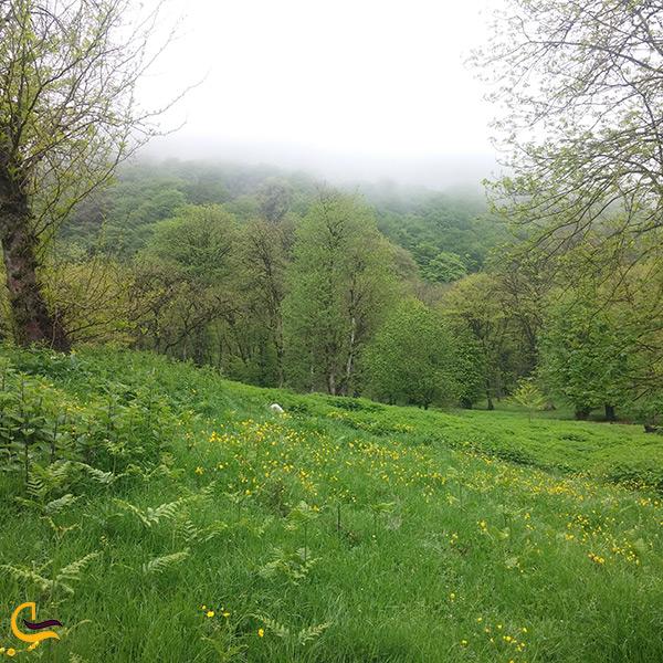 تصویر پارک جنگلی جوارم