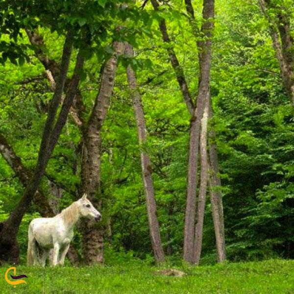 قابی زیبا از پوشش گیاهی و حیوانی جنگل سیسنگان