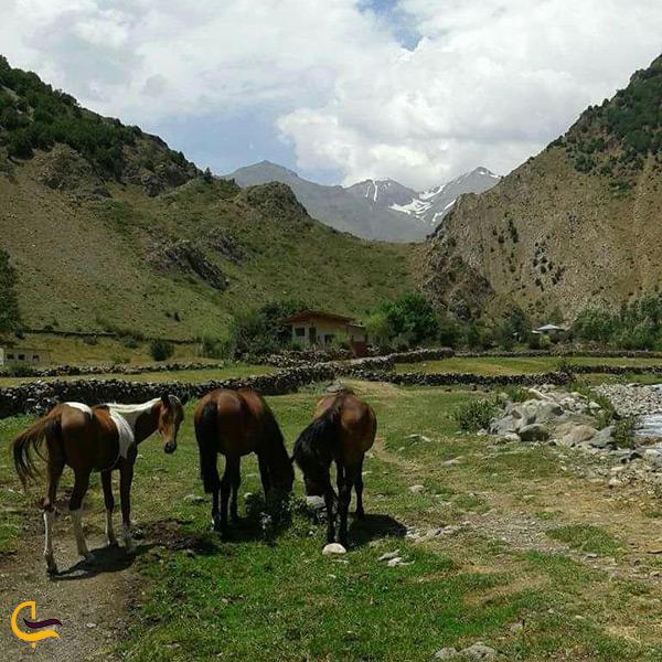 طبیعت زیبای روستای الیت