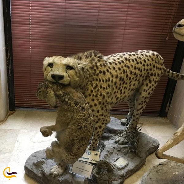 نمایی از موزه حیات وحش خشکه داران