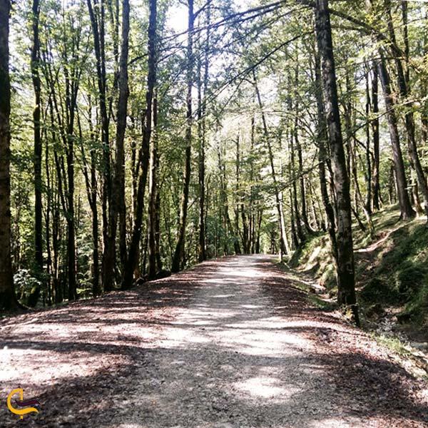 تصویری از جنگل بندپی
