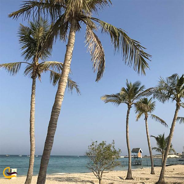 نمایی از ساحل درختان نارگیل کیش