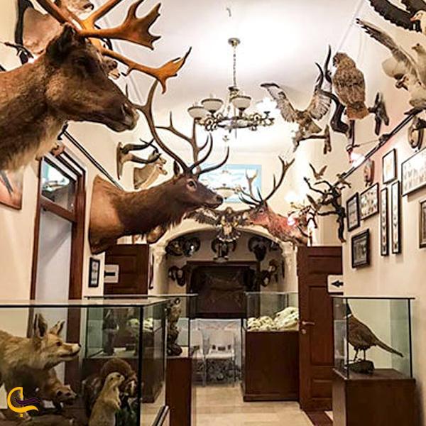تصویری از موزه حیات وحش وکیل آباد مشهد